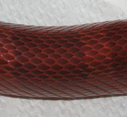 Bloodred Corn Snake Scale Close-Up